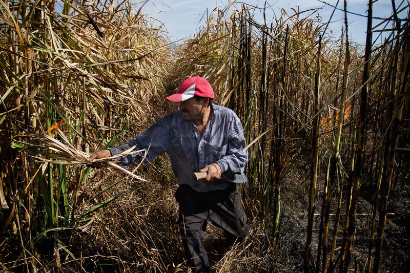 http://www.jeremiasgonzalez.com/files/gimgs/50_agricultura-familiar15bd_v2.jpg