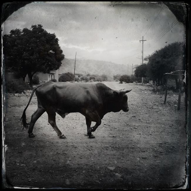 http://www.jeremiasgonzalez.com/files/gimgs/72_a-bolivian-mobile-diary36.jpg